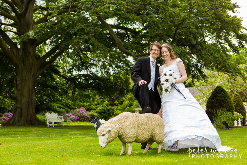 bride and groom with sheep
